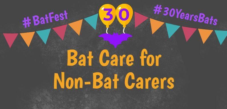 BatFest Bat Care for Non-Bat Carers workshop