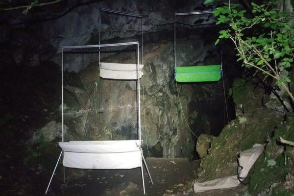 Advanced Bat Survey Techniques