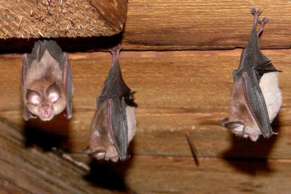What if bats are being a nuisance?