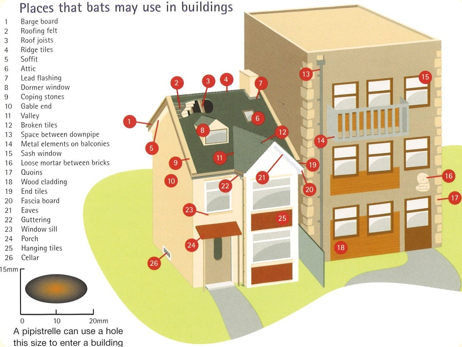 Where might bats be roosting in my property?