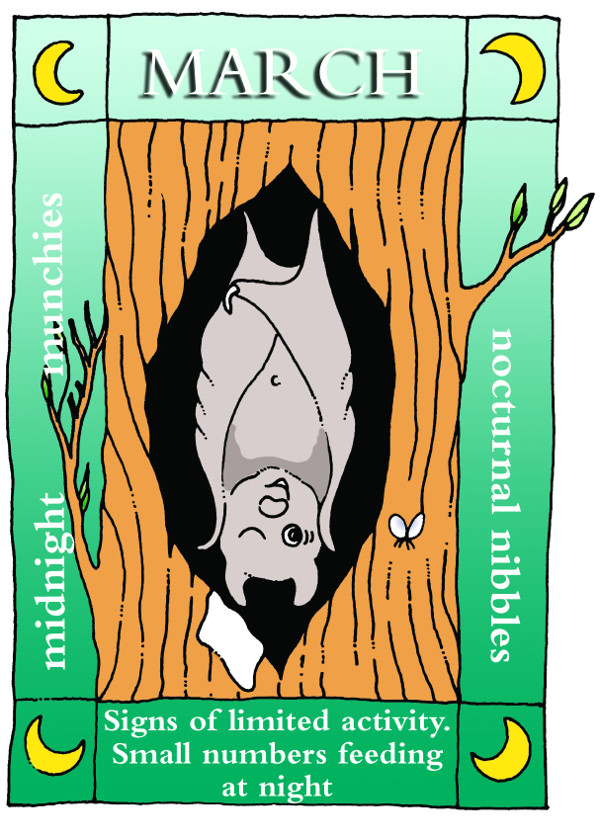 A year in the life of a bat