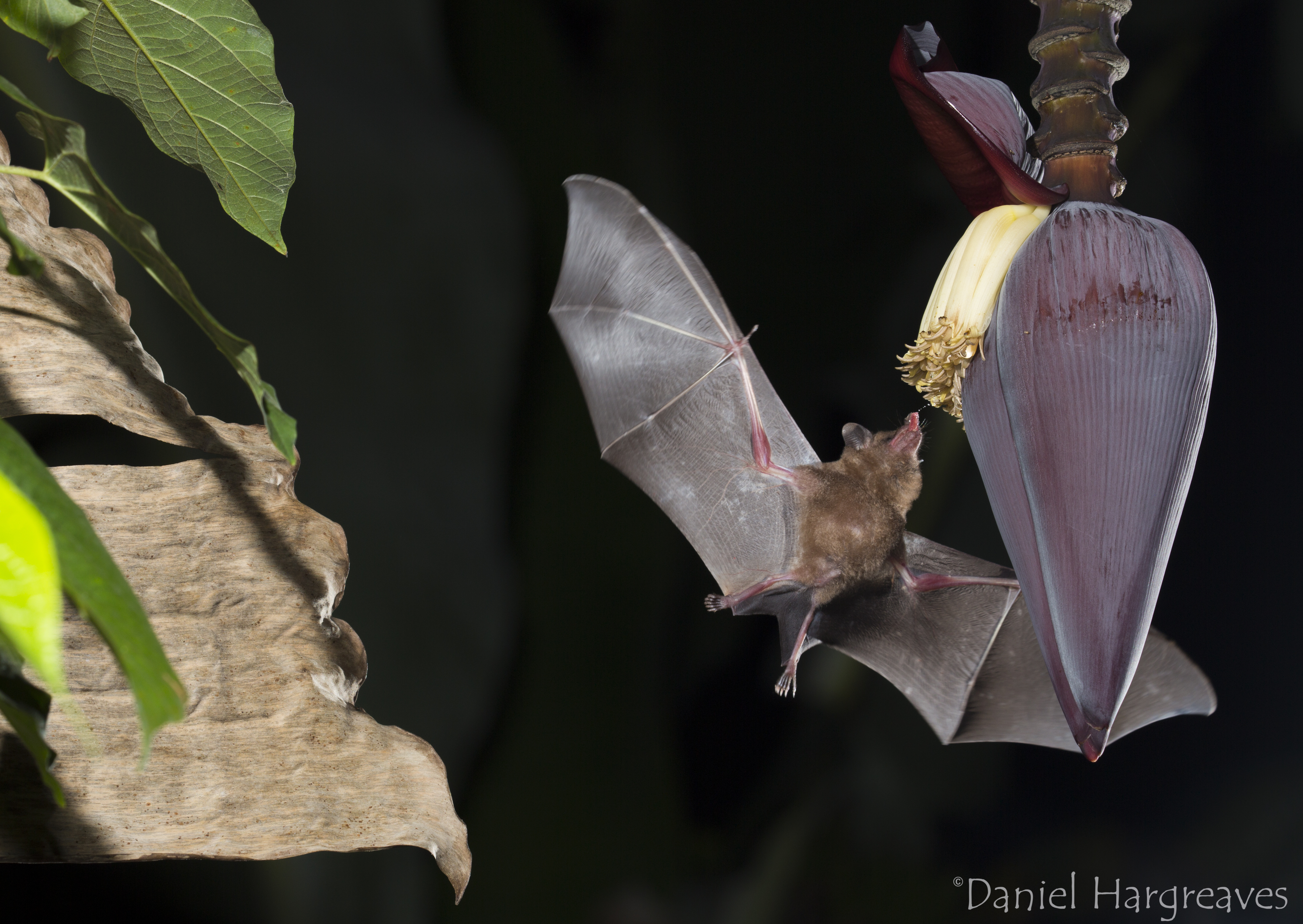 What have bats ever done for us?