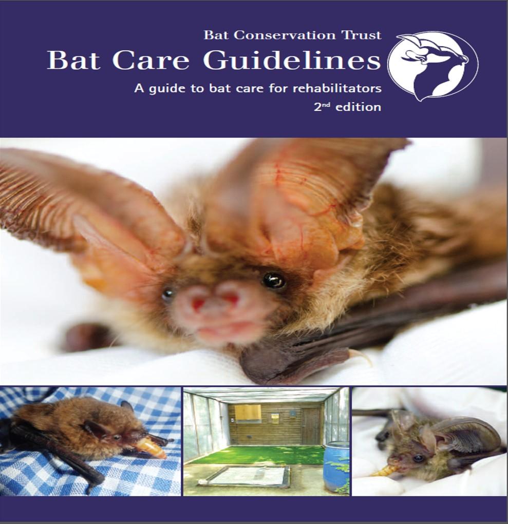 Bat Care Guidelines: A Guide to Bat Care for Rehabilitators