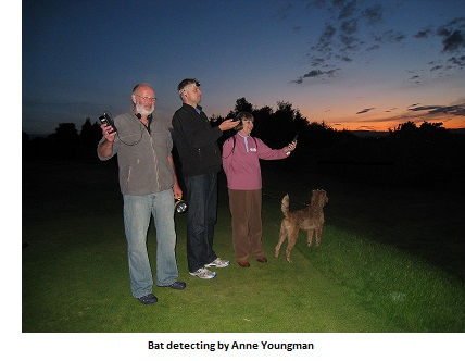 The National Bat Monitoring Programme: Citizen science reveals trends in bat populations