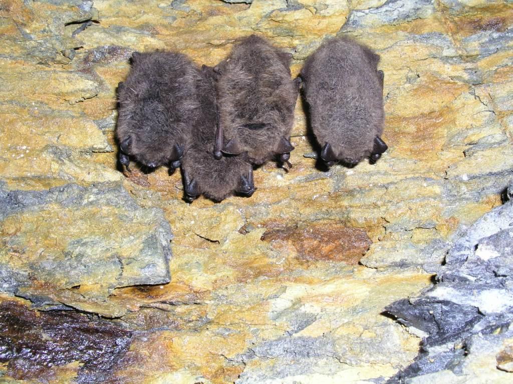 Hibernation roosts