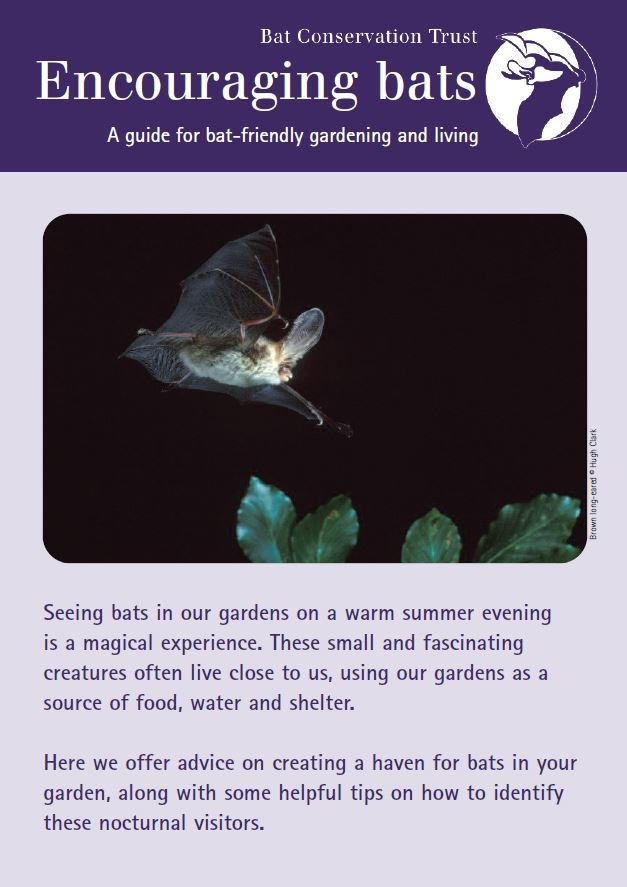 Gardening for bats