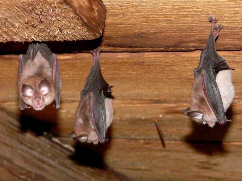 Enhancement for Bats