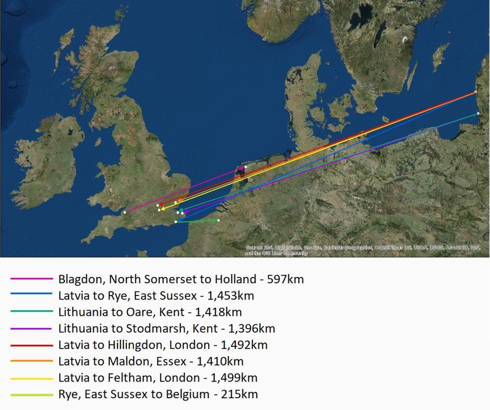 Nomadic Nathusius – bat ringed in the UK discovered in Belgium