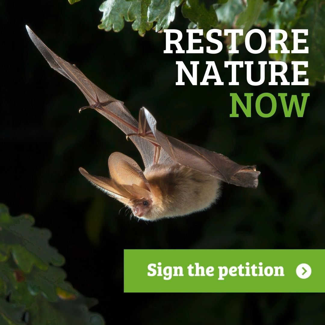 What's in a word? - Help bats with the power of one word