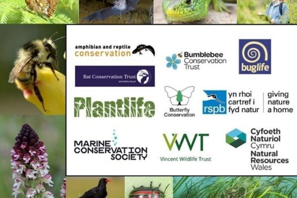 New initiative to save Wales' threatened species  – with lots of opportunities for people to get involved