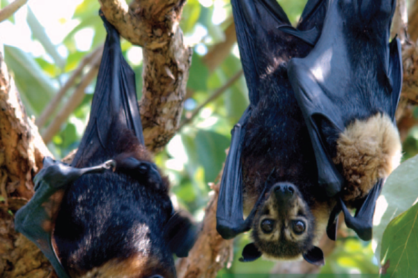 A focus on helping bats for COP26