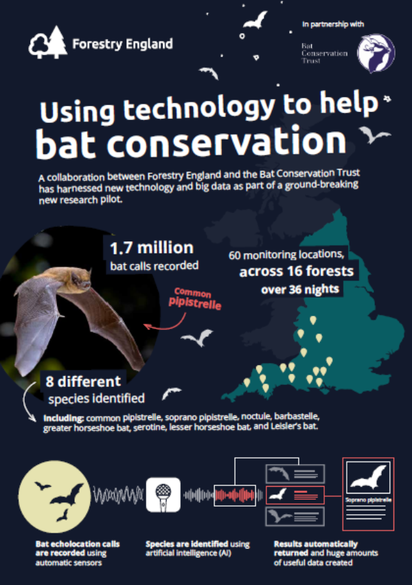 AI and new technology allow ground-breaking study to help protect bats