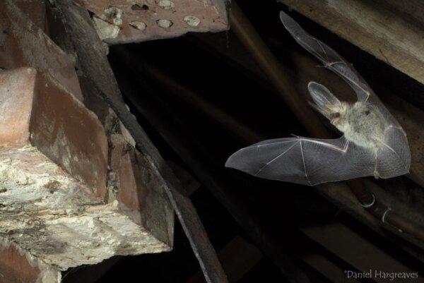 Planning reform – please speak up for bats