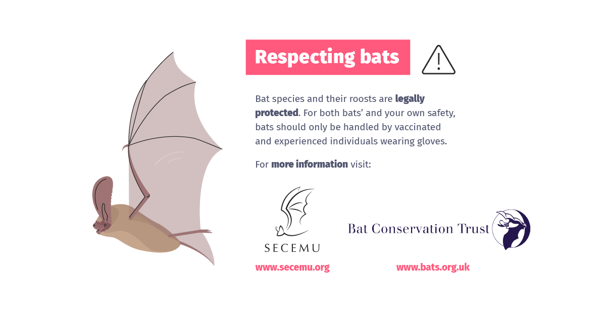 Don't Blame Bats - Campaign Launch