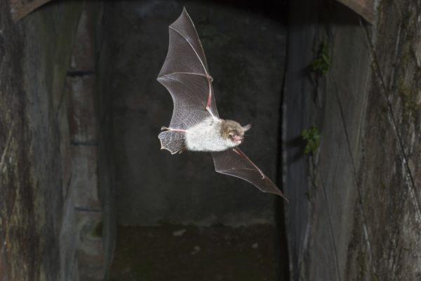 Buying a bat detector