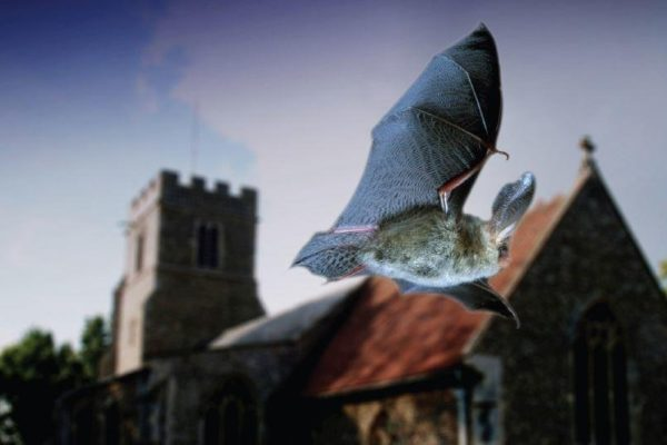 Bats and Churches Partnership Project