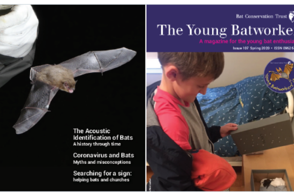 Bat News and The Young Batworker magazines