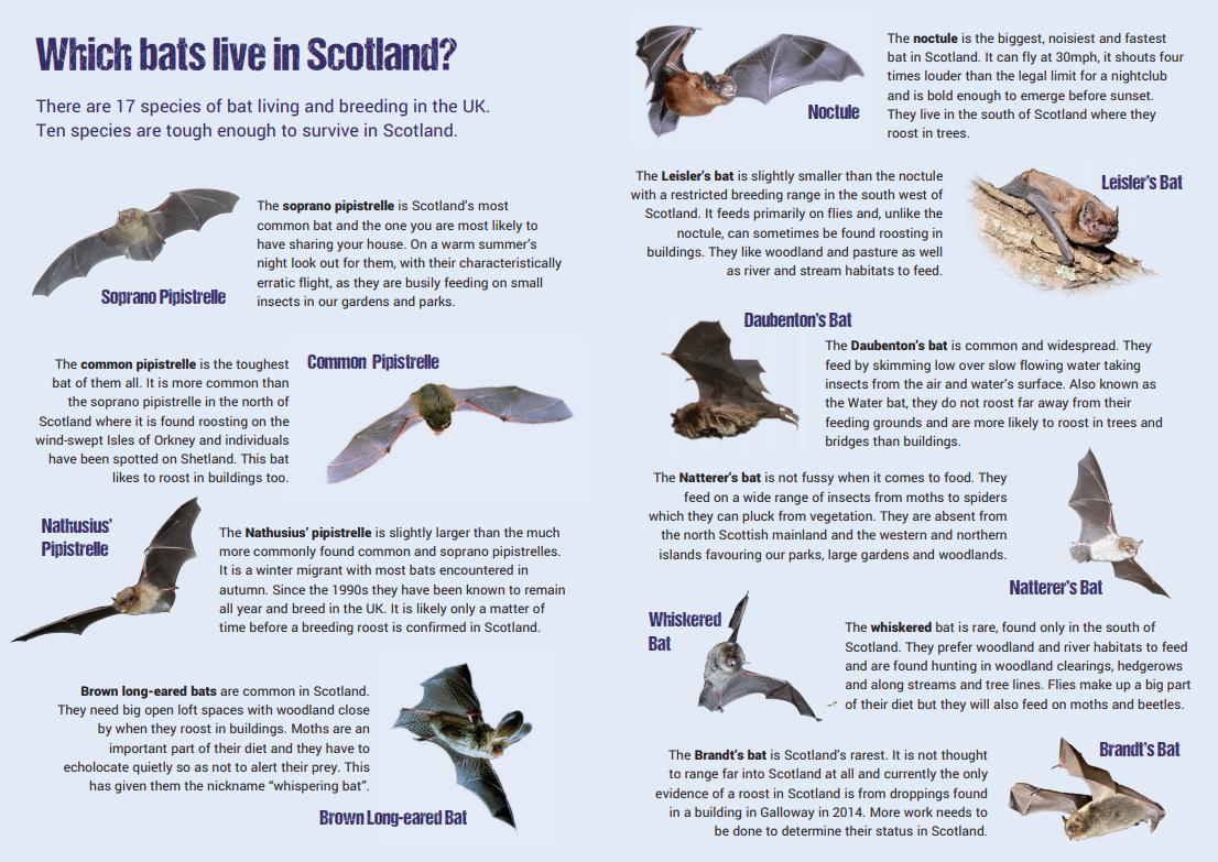 Bats in Scotland