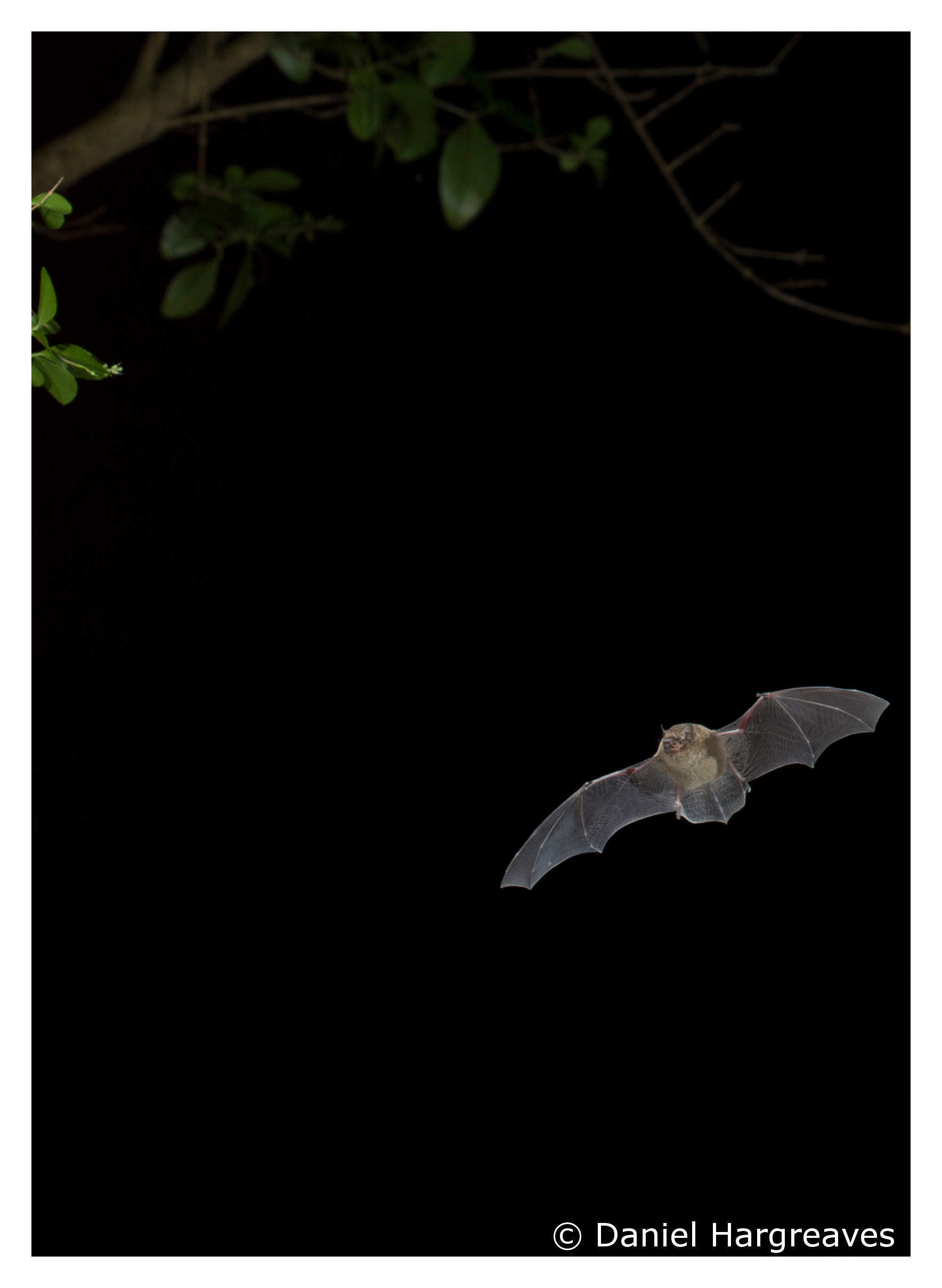 Facts About Bats & COVID-19