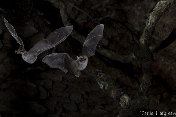 Bat Group Mingle