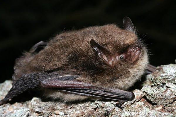Found a dead bat?
