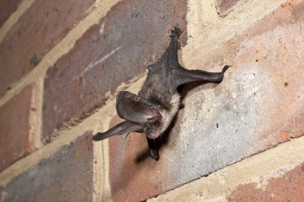 Need help with a bat?
