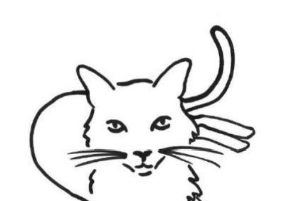 Cat attacks