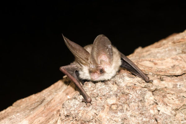 Useful links & documents for bat groups