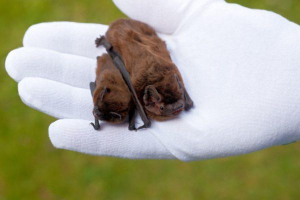 Types of bats