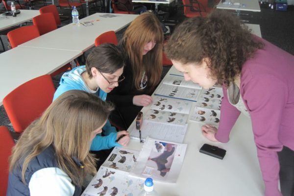 Explore the world of bat conservation through the national curriculum