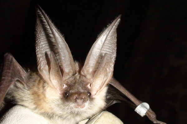 Need help with an academic project on bats?