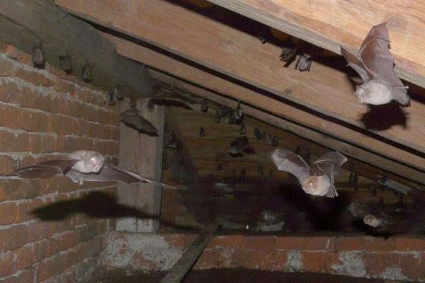 Do I have bats?