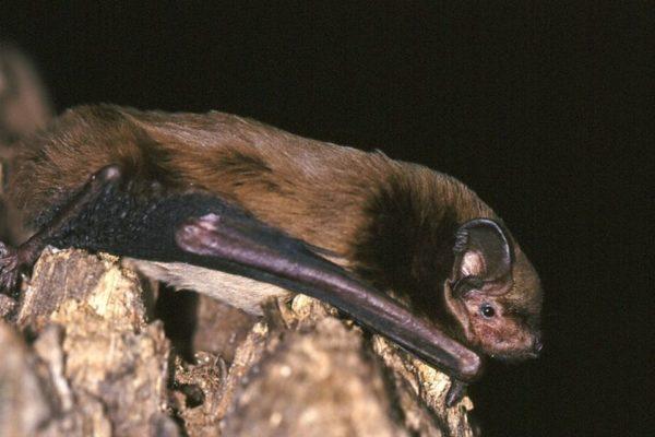 I'm concerned about bats