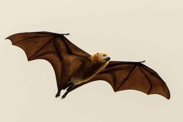 Bats as seed dispersers and reforesters