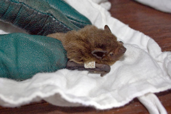 I've found a bat with a ring