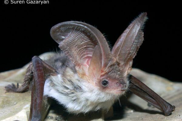 25 years of International Bat Night