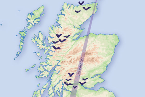 The Scottish Bat Project