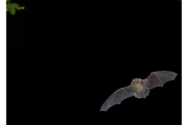 What bat have I seen?