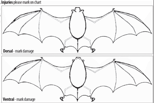 What to do when a bat comes in