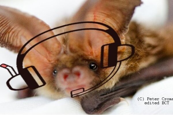 What have people said about the Volunteer Bat Care Helpline