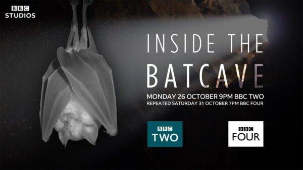 New film: Inside The Bat Cave