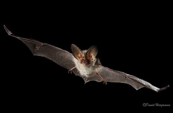 Positive signs for Britain's bat species