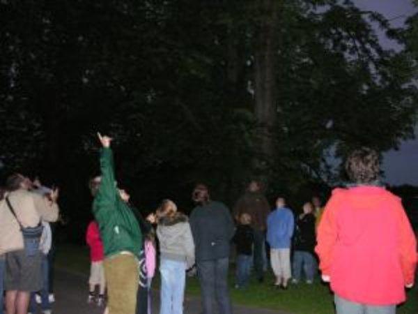 Thousands to Celebrate European Bat Weekend - 30-31 August