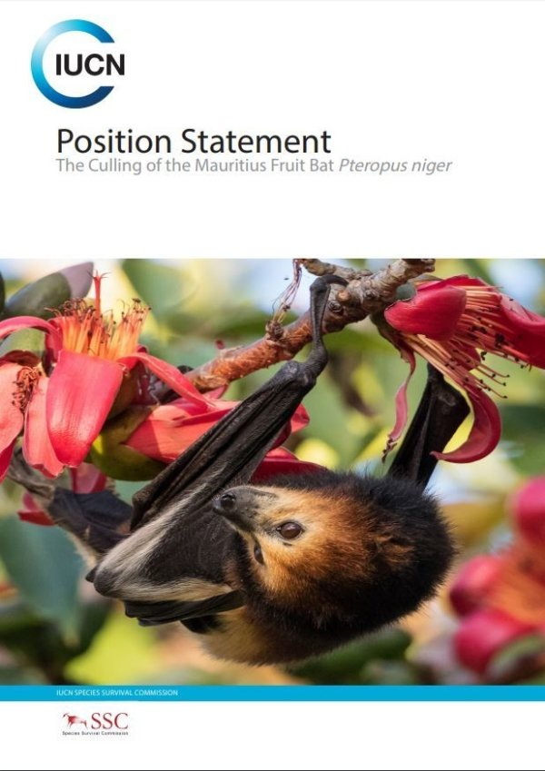 BCT supports calls for an end to culls of the Mauritius Fruit Bat