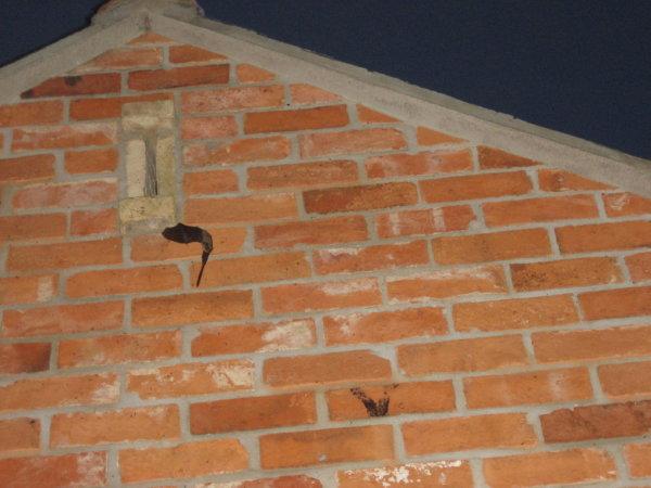 Bat Crime Conviction in York