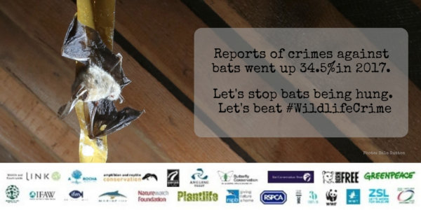 Reform essential to tackle rising wildlife crime and 'appallingly low' number of convictions