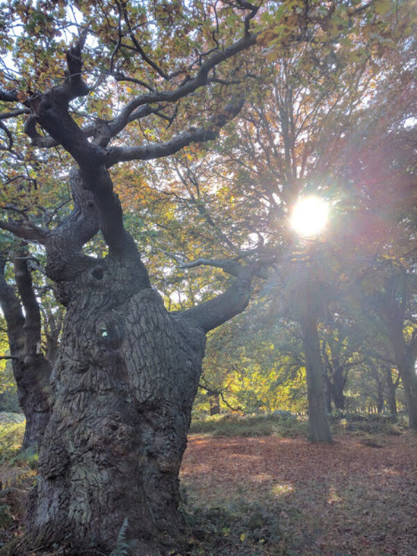 HS2 - Jones Hill Wood