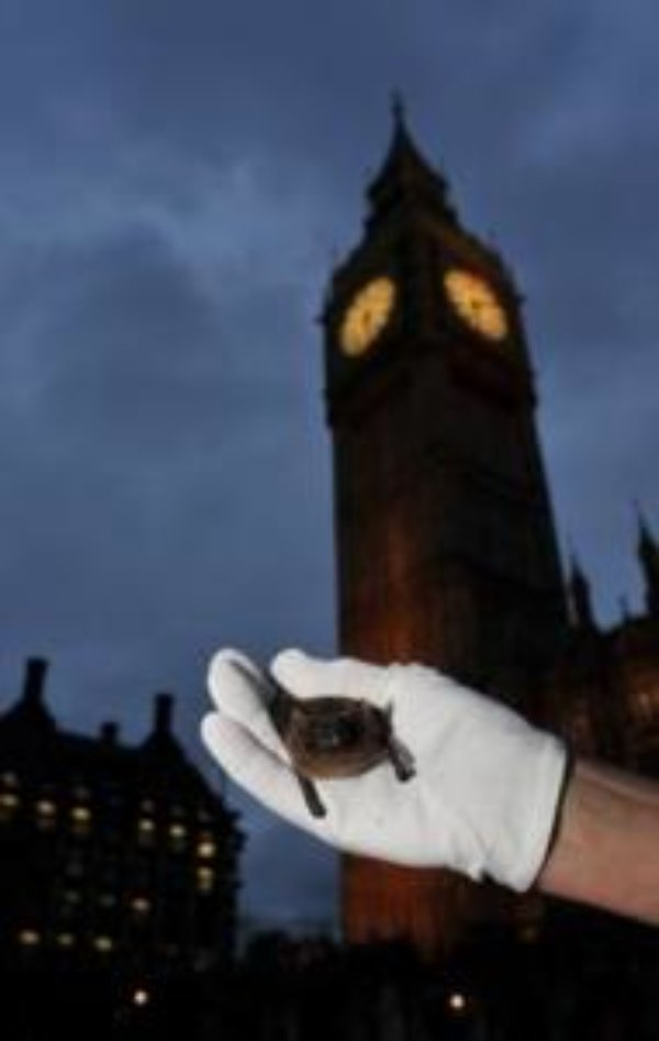 Moths and bats get up close and personal with parliamentarians