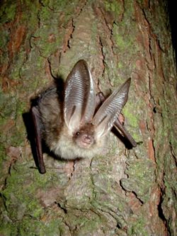 It's HALLOWEEN! So where are the scary bats?