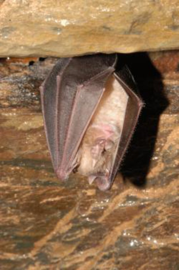 Welsh bats get a helping hand from the Heritage Lottery Fund